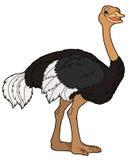 动画片动物-驼鸟-平的着色样式 库存图片