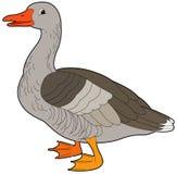 动画片动物-鹅-平的着色样式 免版税库存照片