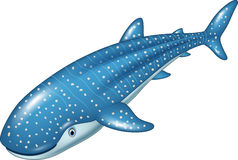 动画片在白色背景的鲸鲨 库存图片