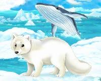 动画片场面-北极动物-白狐和鲸鱼 免版税库存照片