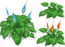 动画片套水芋属灌木和红色,蓝色,白花 库存照片