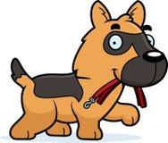 动画片德国牧羊犬皮带 免版税图库摄影