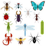动画片被设置的被隔绝的五颜六色的昆虫 免版税库存照片