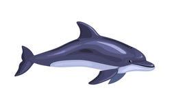 动画片被隔绝的海豚 免版税库存照片