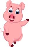 动画片滑稽的猪 库存图片