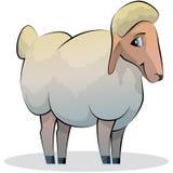动画片绵羊 向量例证