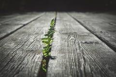 努力通过老,多节木板条的蕨叶子 库存照片