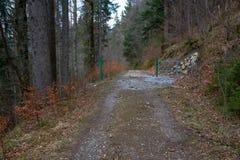 努力去做通过被遮蔽的森林的路在日落 库存图片