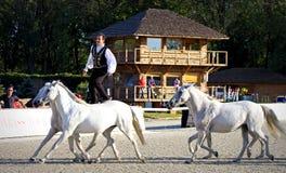 劳伦斯国际马展示 免版税库存照片