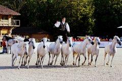 劳伦斯国际马展示 免版税图库摄影