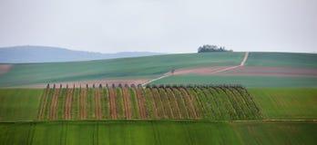 劳动节在下奥地利州,小山的葡萄园 免版税库存图片