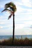 劳德代尔堡海滩棕榈树 免版税图库摄影