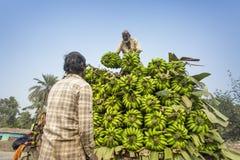 劳方装载到提取搬运车在绿色香蕉 库存照片
