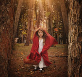 勇敢的矮小的红色Reding敞篷在森林里 免版税库存照片