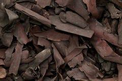 勒坦有机干燥吠声摘记(Alkanna tinctoria) 免版税库存照片