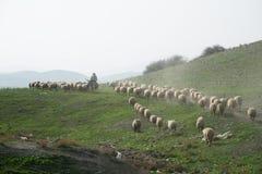 巴勒斯坦牧羊人在约旦河西岸约旦谷 库存图片