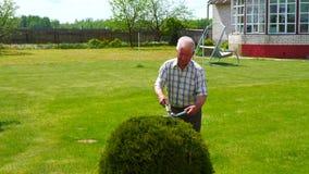 勤勉老人修剪与美丽的剪刀庭院装饰物灌木 股票视频