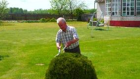 勤勉老人修剪与美丽的剪刀庭院装饰物灌木 股票录像