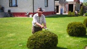 勤勉退休花匠用剪刀装饰物灌木切开 影视素材