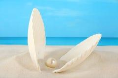 包含珍珠壳的海滩蛤蜊 免版税库存图片