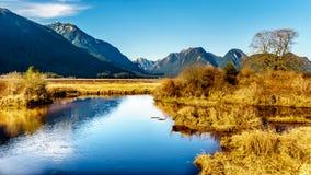 包围彼特河和Pitt湖不列颠哥伦比亚省加拿大费沙尔谷的海岸山脉的积雪的峰顶  免版税库存照片