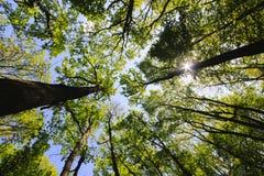 包围由结构树,低角度射击 免版税库存图片