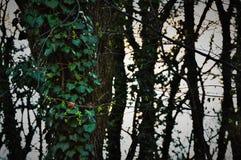 包括一棵树的植被在森林里 免版税库存照片