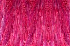 包括桃红色珍珠鸡的美好的抽象背景用羽毛装饰 免版税库存图片