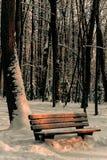 包括的公园雪 免版税库存图片