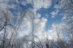包括的冰结构树 库存图片