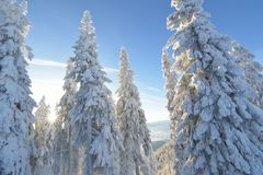 包括的冷杉雪结构树 美丽如画的多雪的冬天风景的全景 库存照片