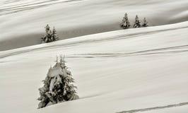 包括的冷杉雪结构树 库存照片