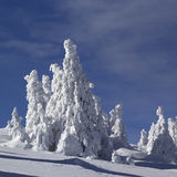 包括的冷杉雪结构树 免版税库存图片