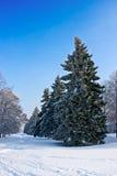 包括的冷杉霜结构树 库存图片