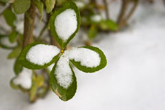 包括的叶子雪 免版税图库摄影