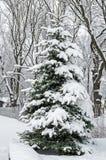 包括的图画容易地冷杉损失质量可升级的雪结构树 免版税图库摄影
