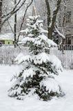 包括的图画容易地冷杉损失质量可升级的雪结构树 免版税库存照片