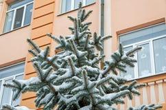 包括的图画容易地冷杉损失质量可升级的雪结构树 库存图片