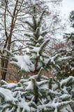 包括的图画容易地冷杉损失质量可升级的雪结构树 免版税库存图片