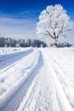 包括的天空雪结构树 免版税图库摄影
