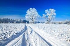 包括的天空雪结构树 免版税库存图片