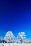 包括的天空雪结构树 免版税库存照片