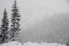 包括的小山雪结构树 图库摄影
