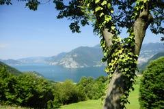 包括的常春藤湖结构树 图库摄影