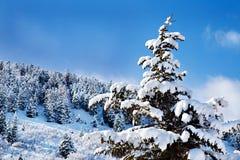 包括的日雪晴朗的结构树犹他 库存照片