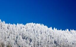 包括的杉木地平线雪结构树 图库摄影