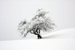 包括的查出的雪结构树 库存图片
