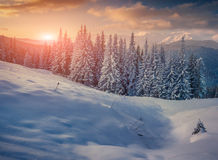 包括的树冰房子山山雪结构树 库存照片