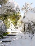 包括的森林发出光线雪星期日 免版税库存图片