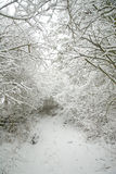 包括的森林路径雪 免版税库存图片